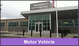 Motor Vehicle